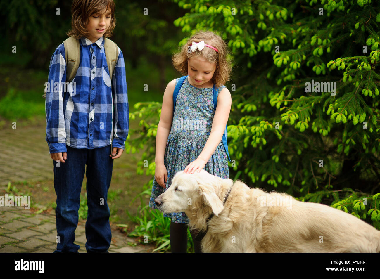 Little schoolchildren met on the way to school a large dog. The good-natured retriever drew the children's attention. - Stock Image