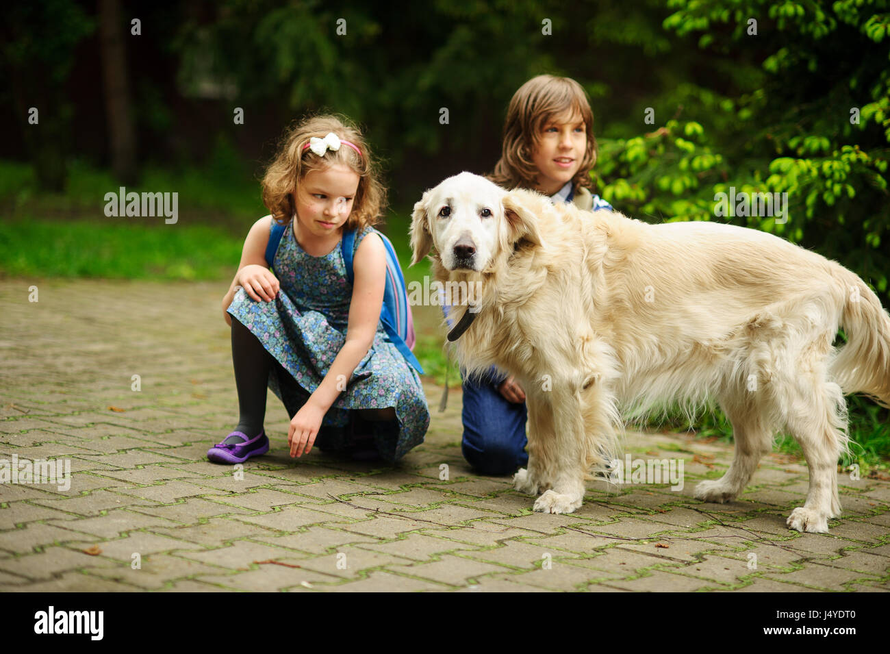 Little schoolchildren meet on the way to school a large dog. Good-natured retriever drew the children's attention. - Stock Image