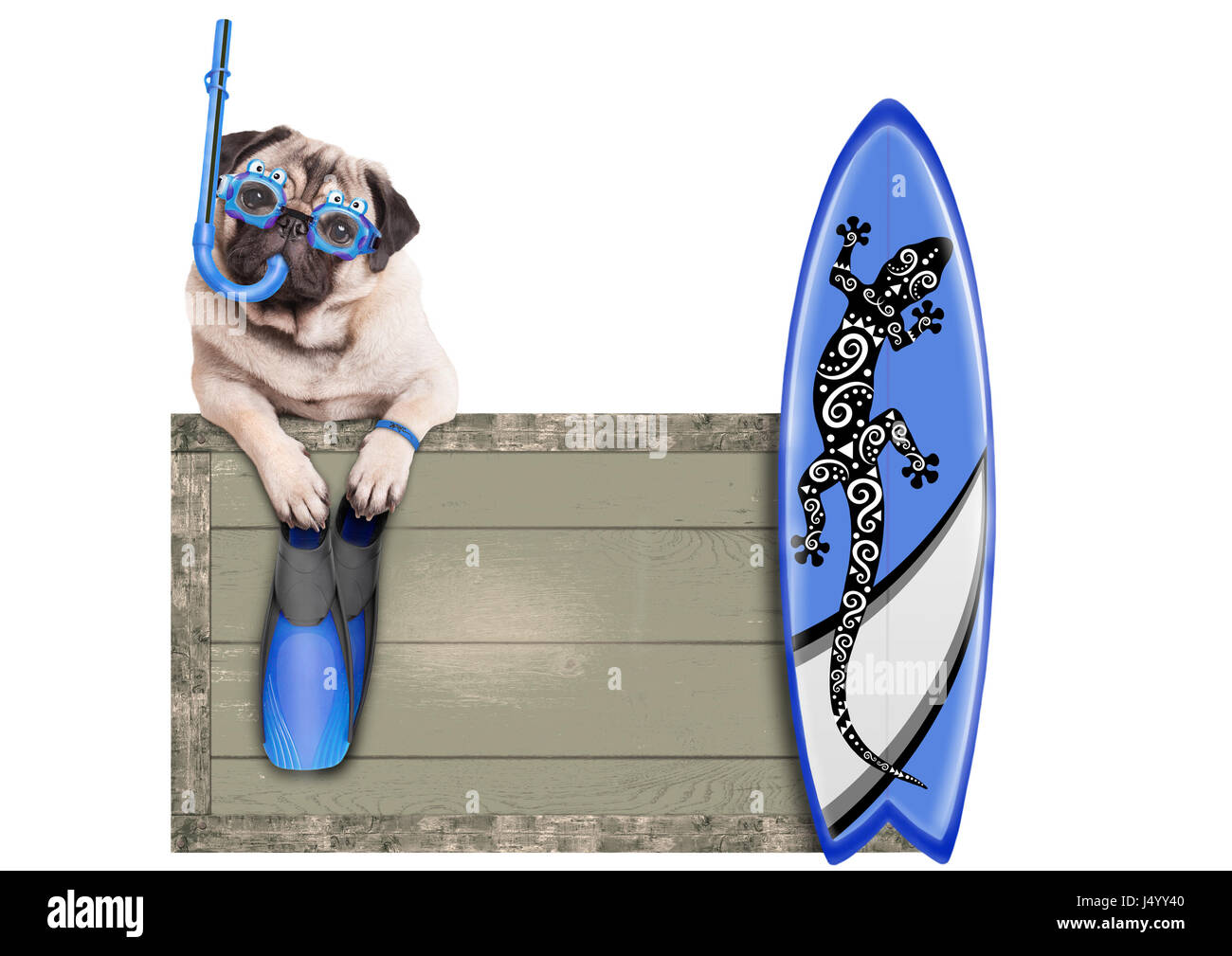 funny pug dog with blue vintage wooden beach sign, with goggles, snorkel, surfboard and flippers for summer, isolated Stock Photo