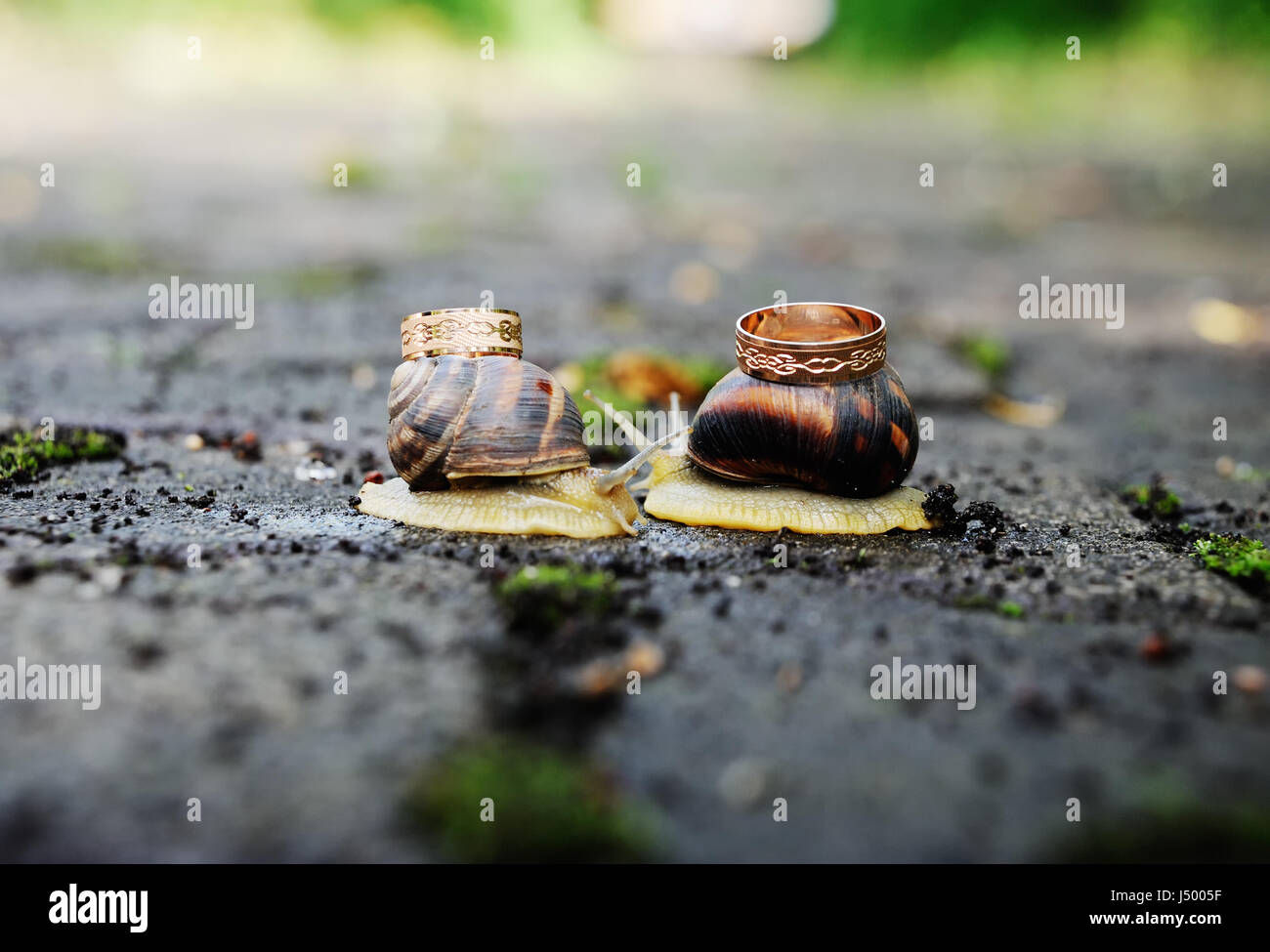 wedding rings on snails. Snails kiss. Stock Photo