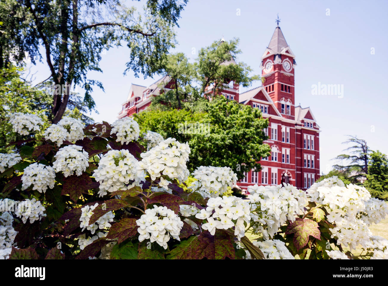 Auburn Alabama Auburn University Samford Hall Clock Tower administration building picturesque grounds campus higher - Stock Image