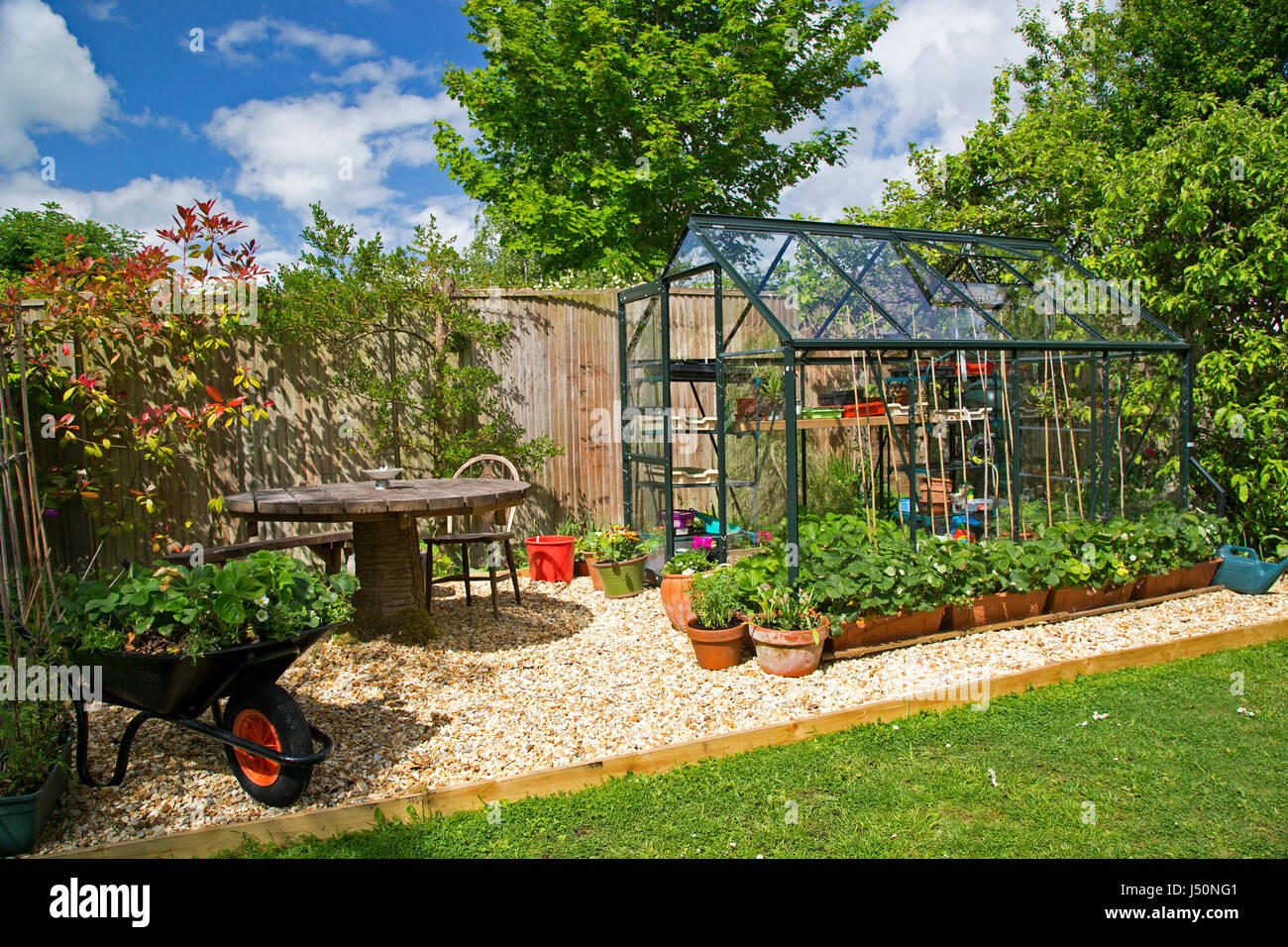 A plant-filled greenhouse in a domestic garden pictured on a sunny spring day in Oxfordshire, UK. Stock Photo
