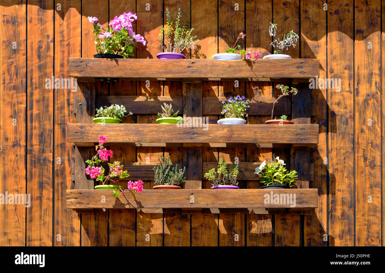 floral display in old re-used pallet, sardinia, italy - Stock Image