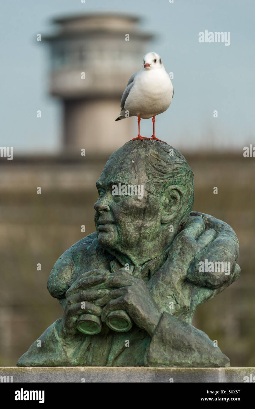 A seagull perches on the statue of Sir Peter Scott at the Wildfowl and Wetlands Trust at Slimbridge in Gloucestershire. Stock Photo