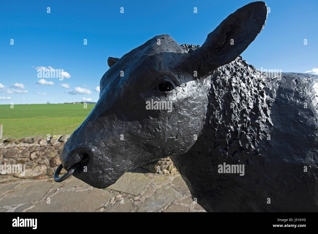 The Famous Black Bull Statue by the roadside at the East entrance to the Aberdeenshire town of Alford in Grampian - Stock Image