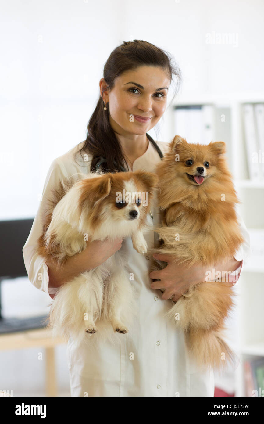 Veterinarian with dogs in hands in clinic - Stock Image