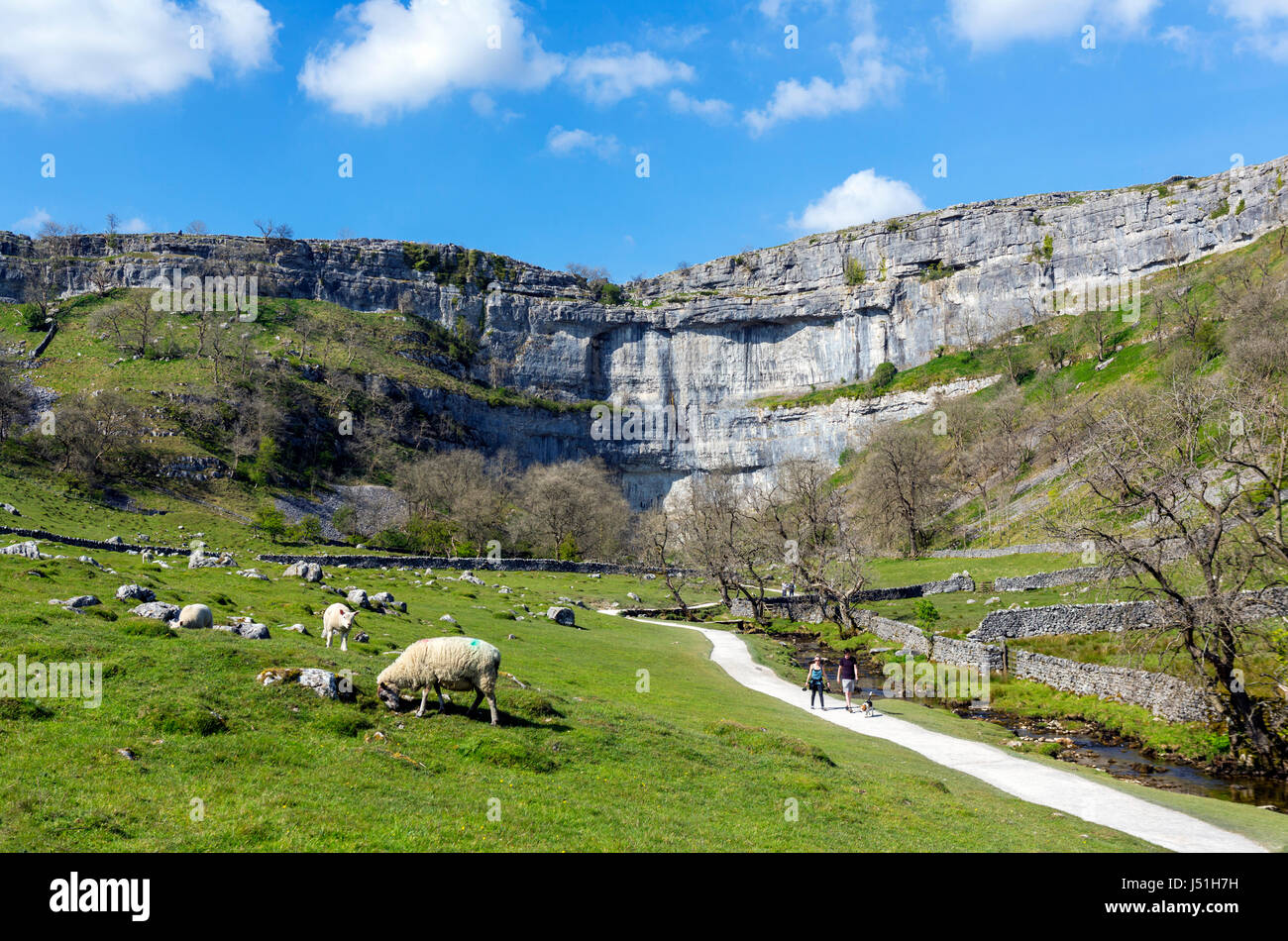 Sheep by the footpath to Malham Cove, Malham, Malhamdale, Yorkshire Dales National Park, North Yorkshire, England, - Stock Image