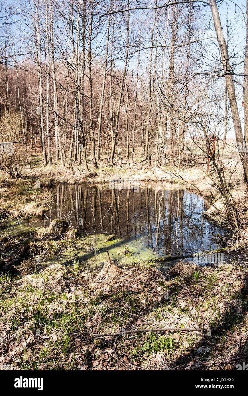 small lake with trees and clear sky reflected on its water ground durinh nice spring day near Vresina village only Stock Photo