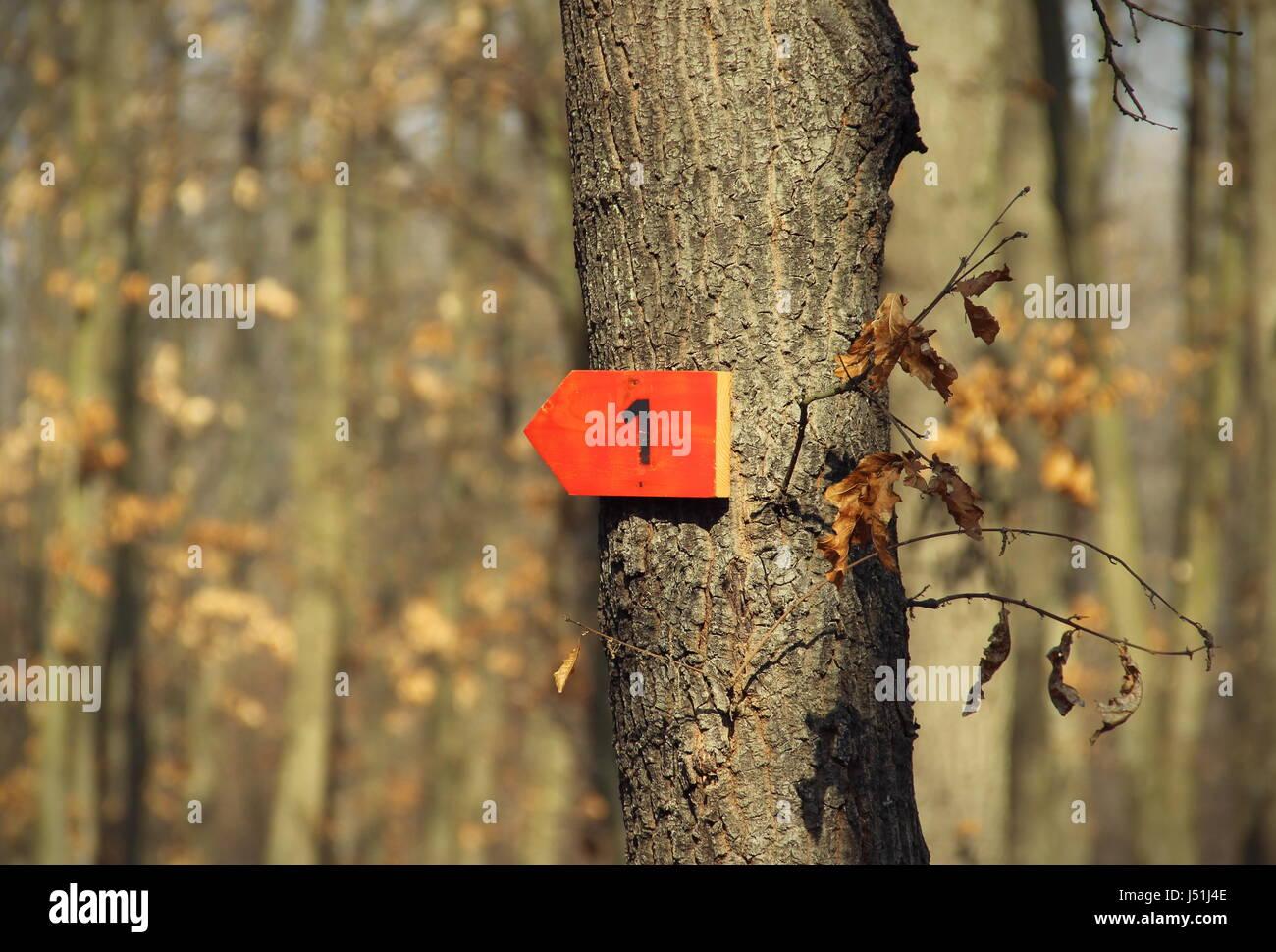 Arrow sign on tree - Stock Image