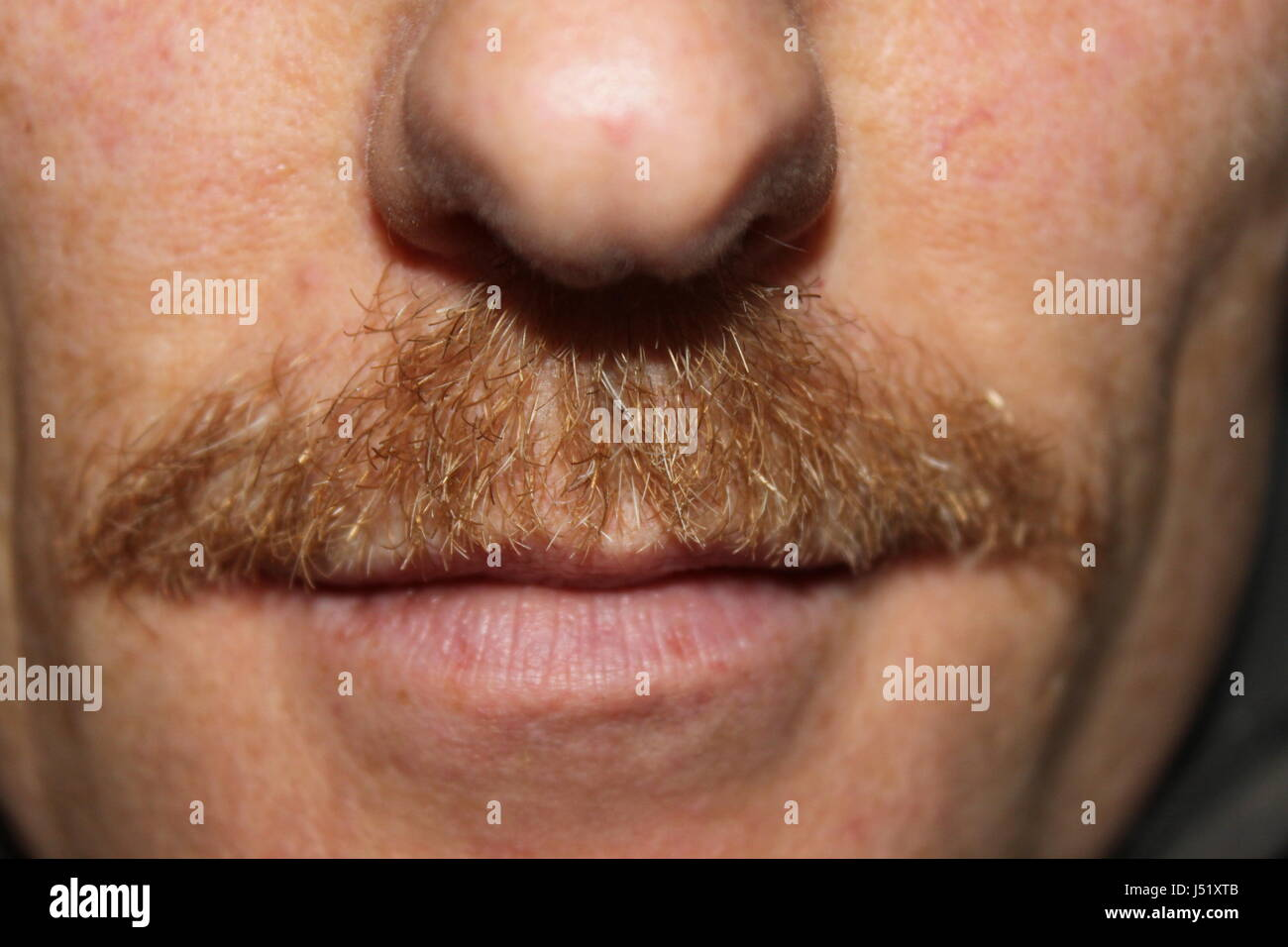 Closeup on mans nose mouth and reddish moustache grown for Movember - Stock Image
