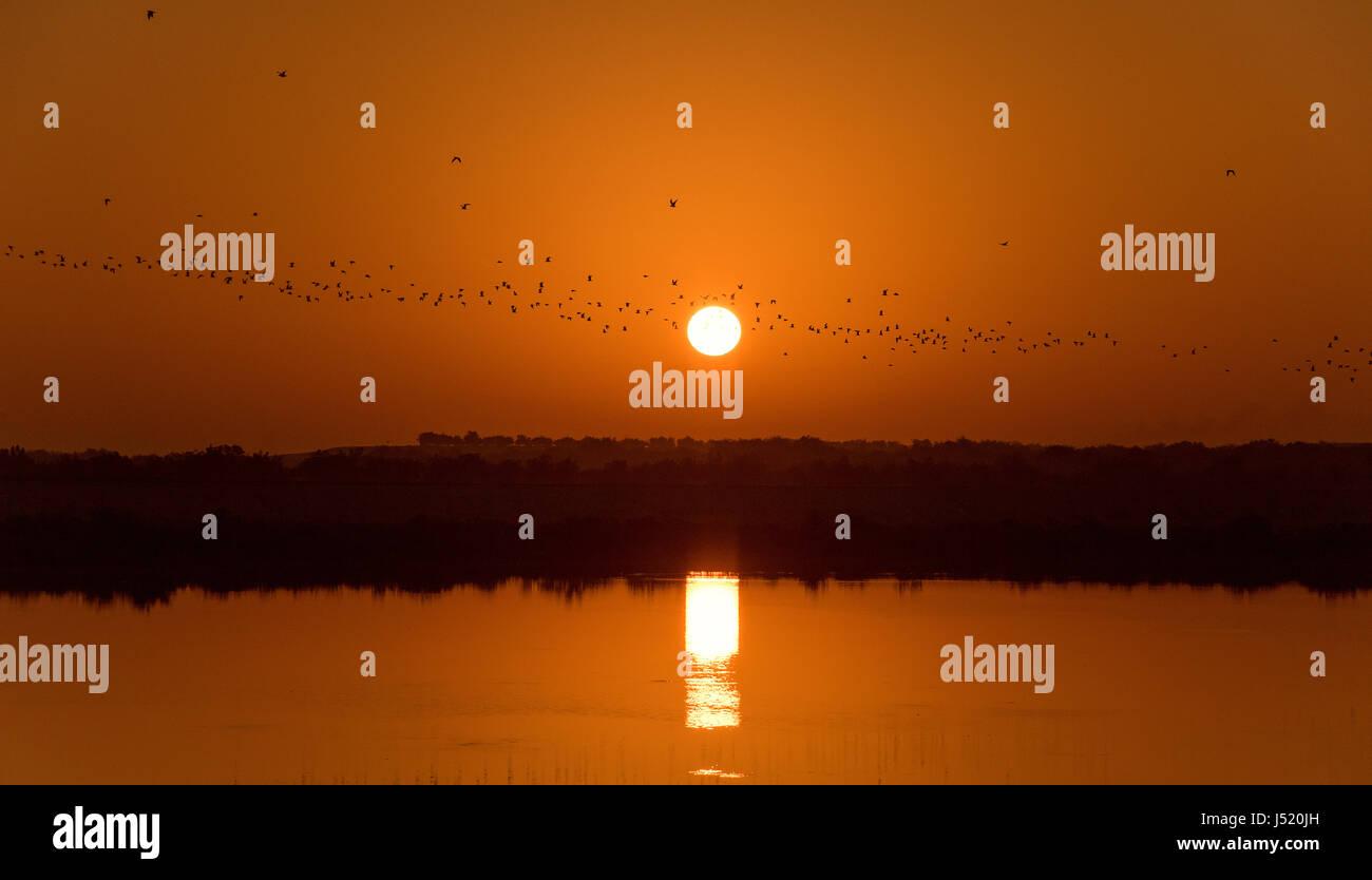 Sunrise of Sir Bani Yas Island - Stock Image
