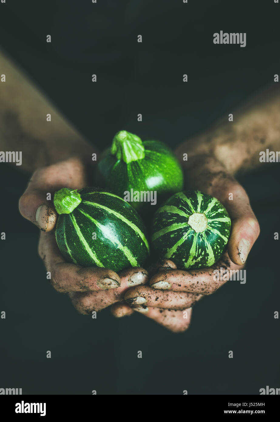 Man wearing black clothing holding fresh seasonal green round zucchinis in his dirty hands at local farmers market. - Stock Image