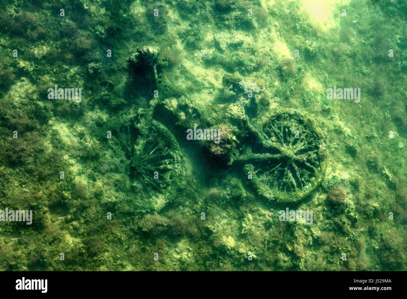 A bicycle that's been thrown into a local river and is slowly being covered in algae and underwater plant life - Stock Image