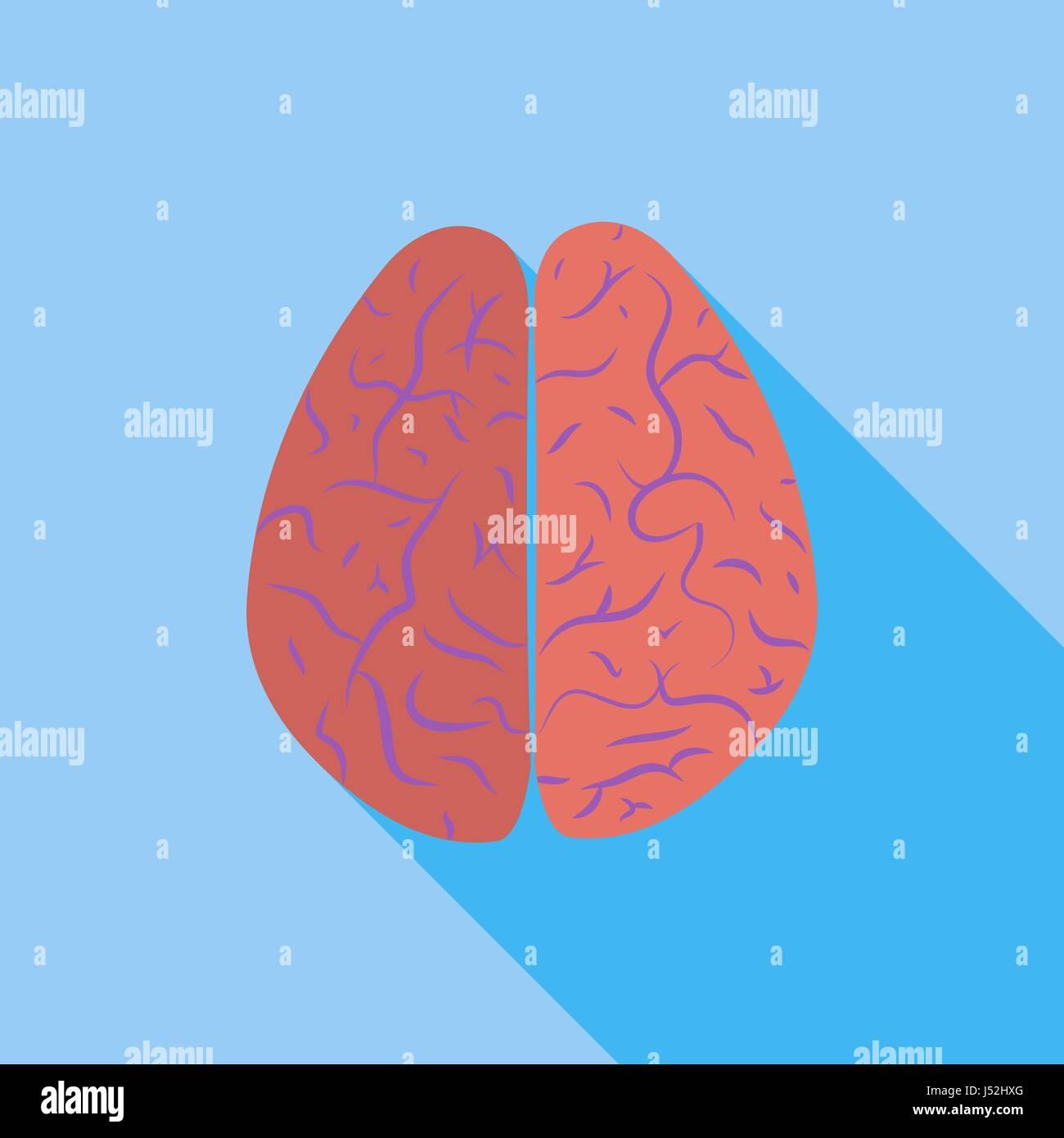 Brain. - Stock Vector