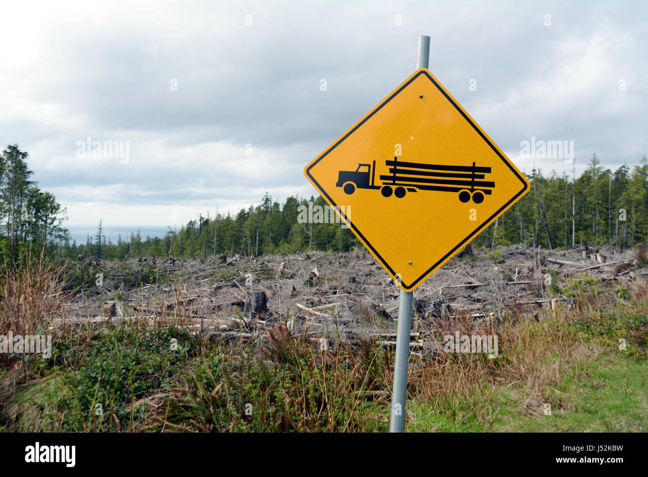 Silviculture Stock Photos Amp Silviculture Stock Images Alamy