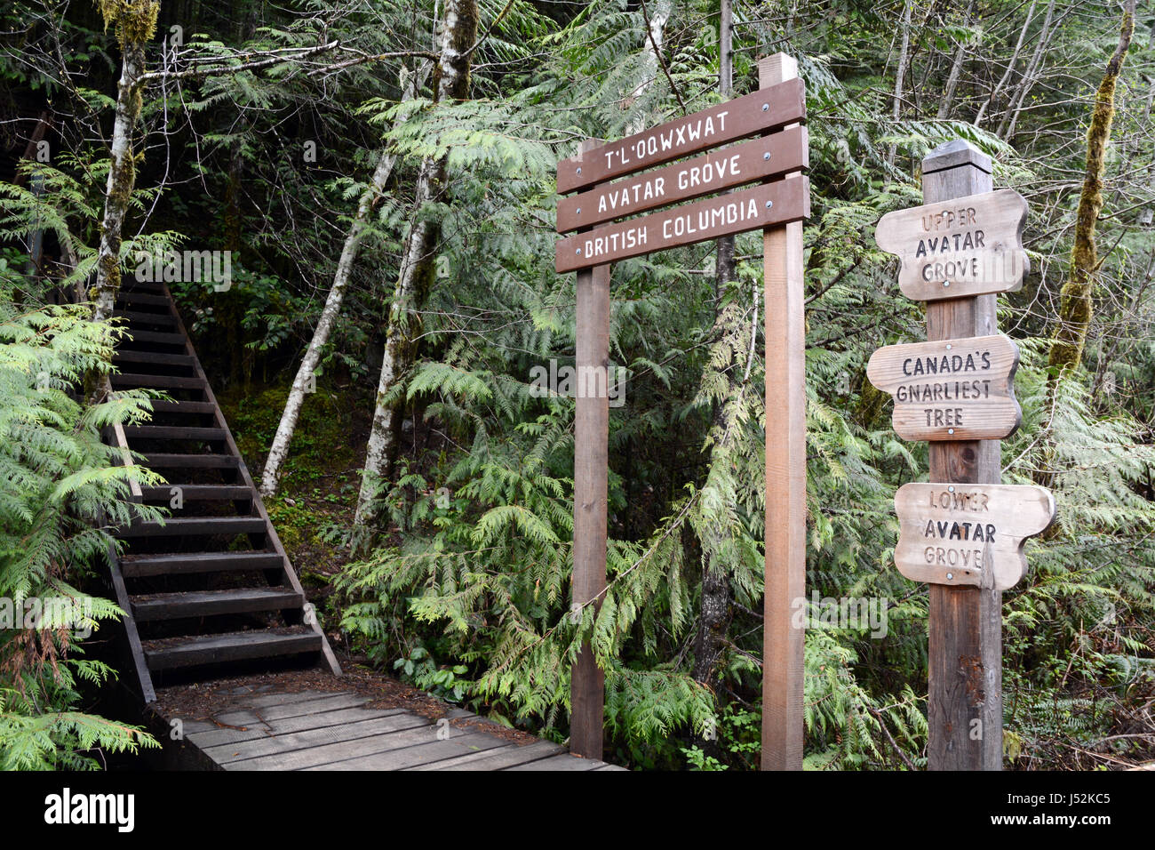 Signs showing the entrance to Avatar Grove, a protected ancient old growth forest on Vancouver Island, British Columbia, - Stock Image