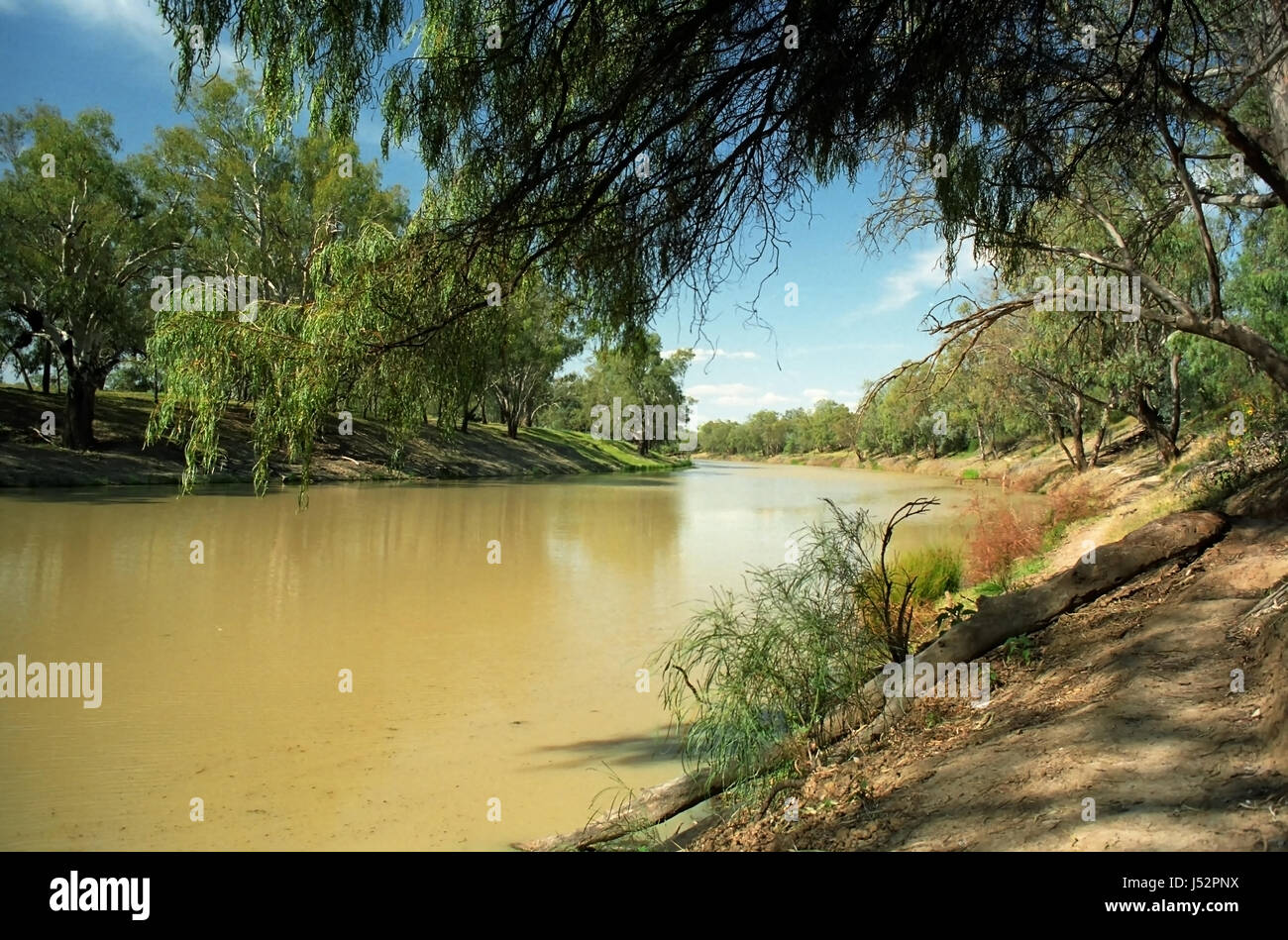 The Darling River at Bourke, New South Wales, Australia: the river before the droughts and over-exploitation affected - Stock Image