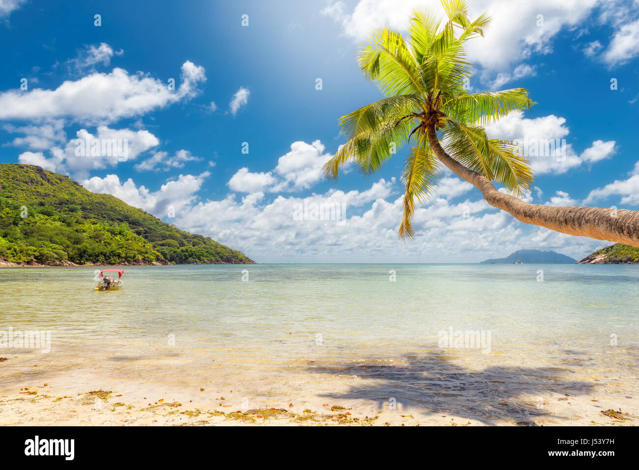 Palms on the beach under sea in sunny day - Stock Image