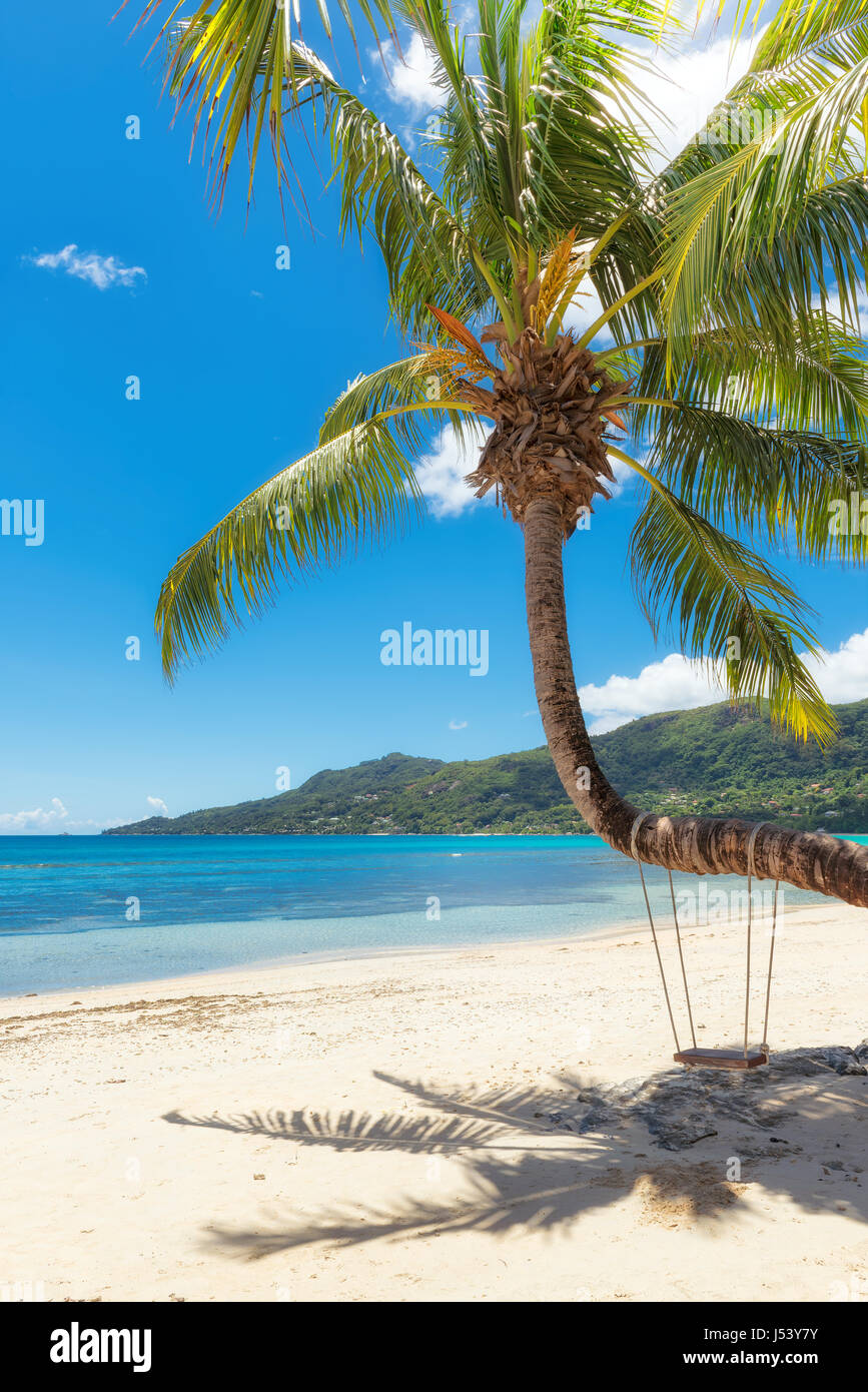 .Sandy beach with palm trees - Stock Image