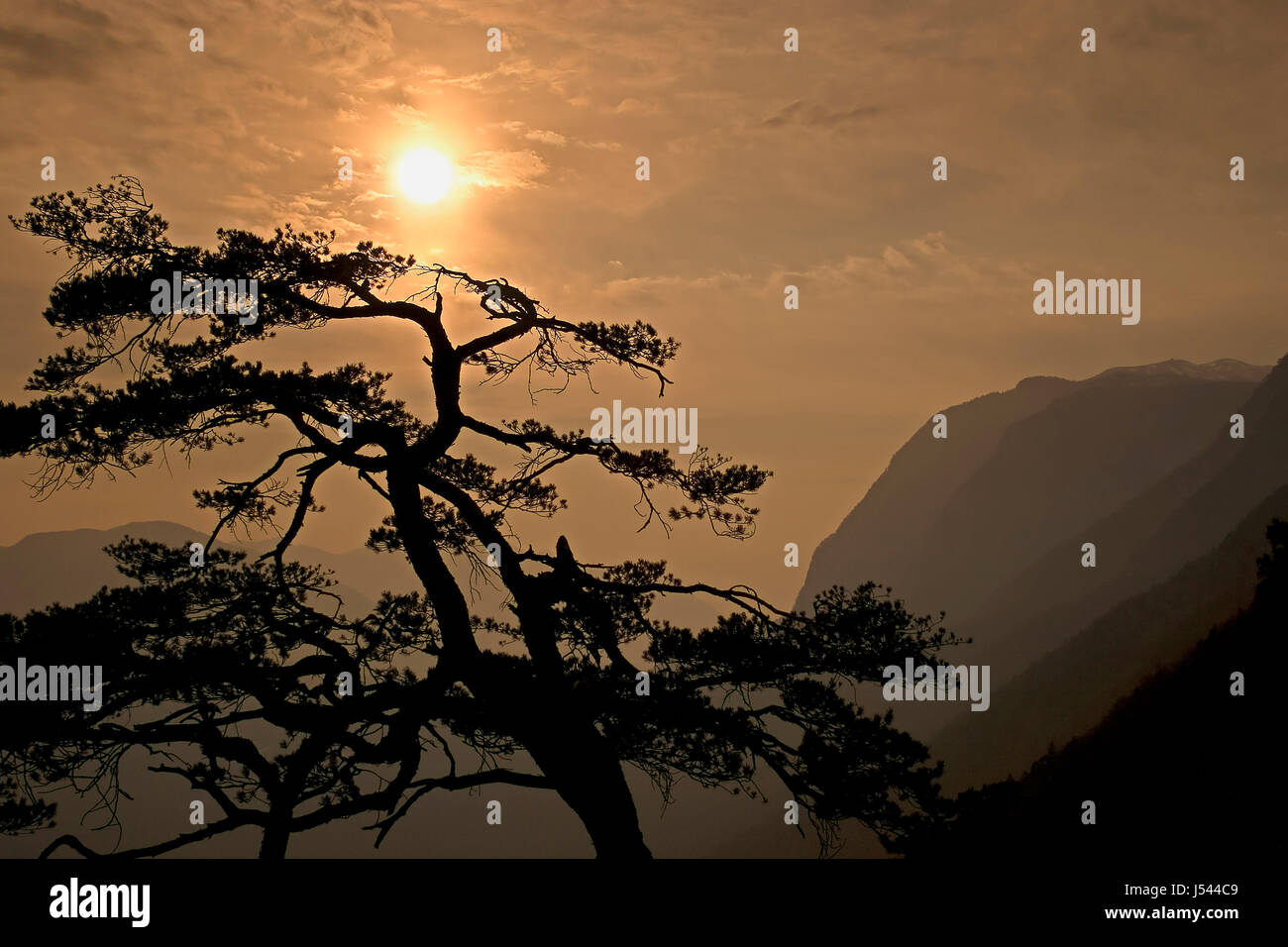 tree mountains muddily sultry sultriness stoicism passivity gay scenery - Stock Image