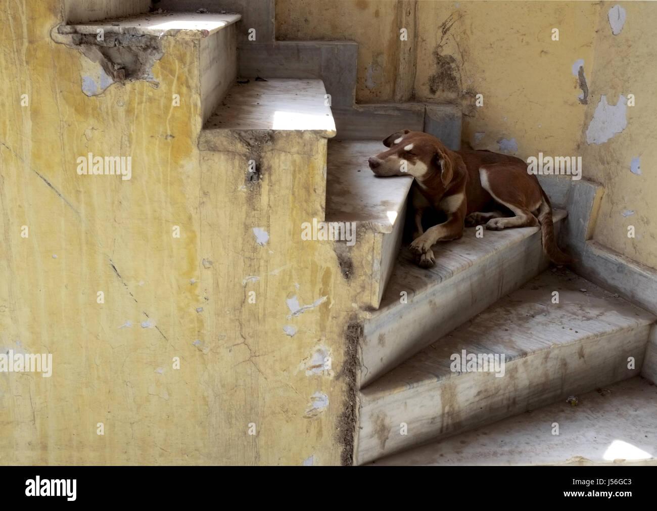 Dog sleeping in ruined temple, Amritsar, Punjab - Stock Image