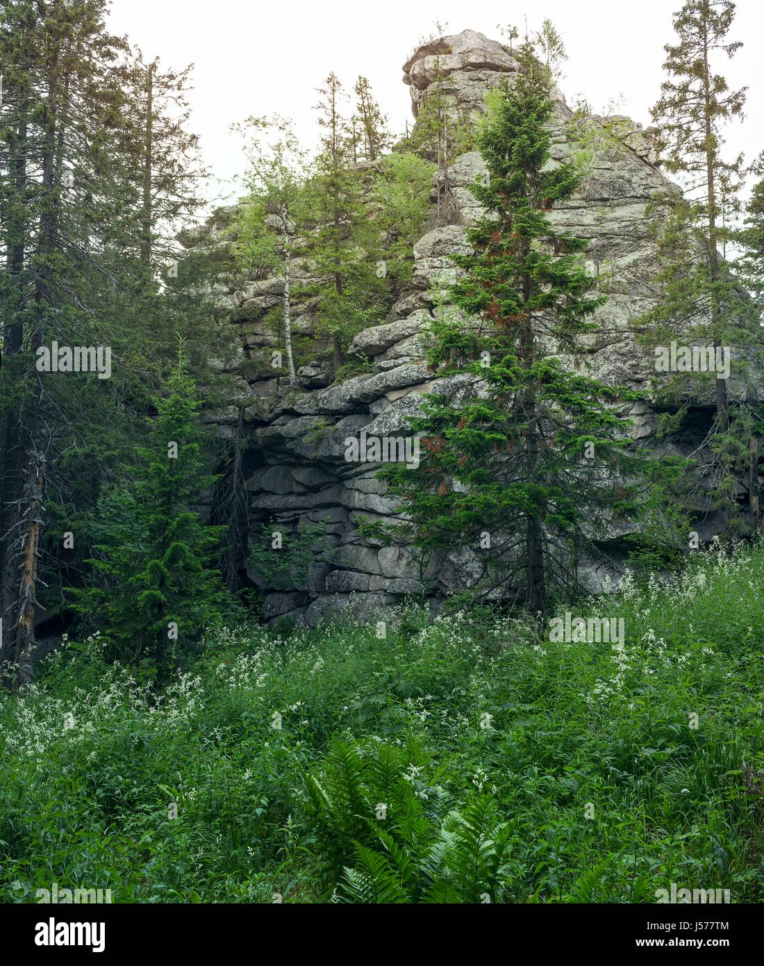 A stone remains in the forest. The nature of the southern Urals. Wild places. Stone giant. - Stock Image