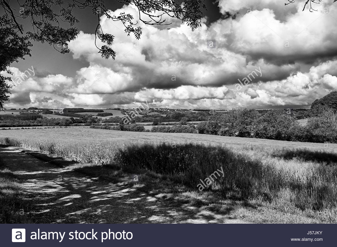 A black and white images of farmland in Great Rissington in the Cotswolds England UK countryside - Stock Image