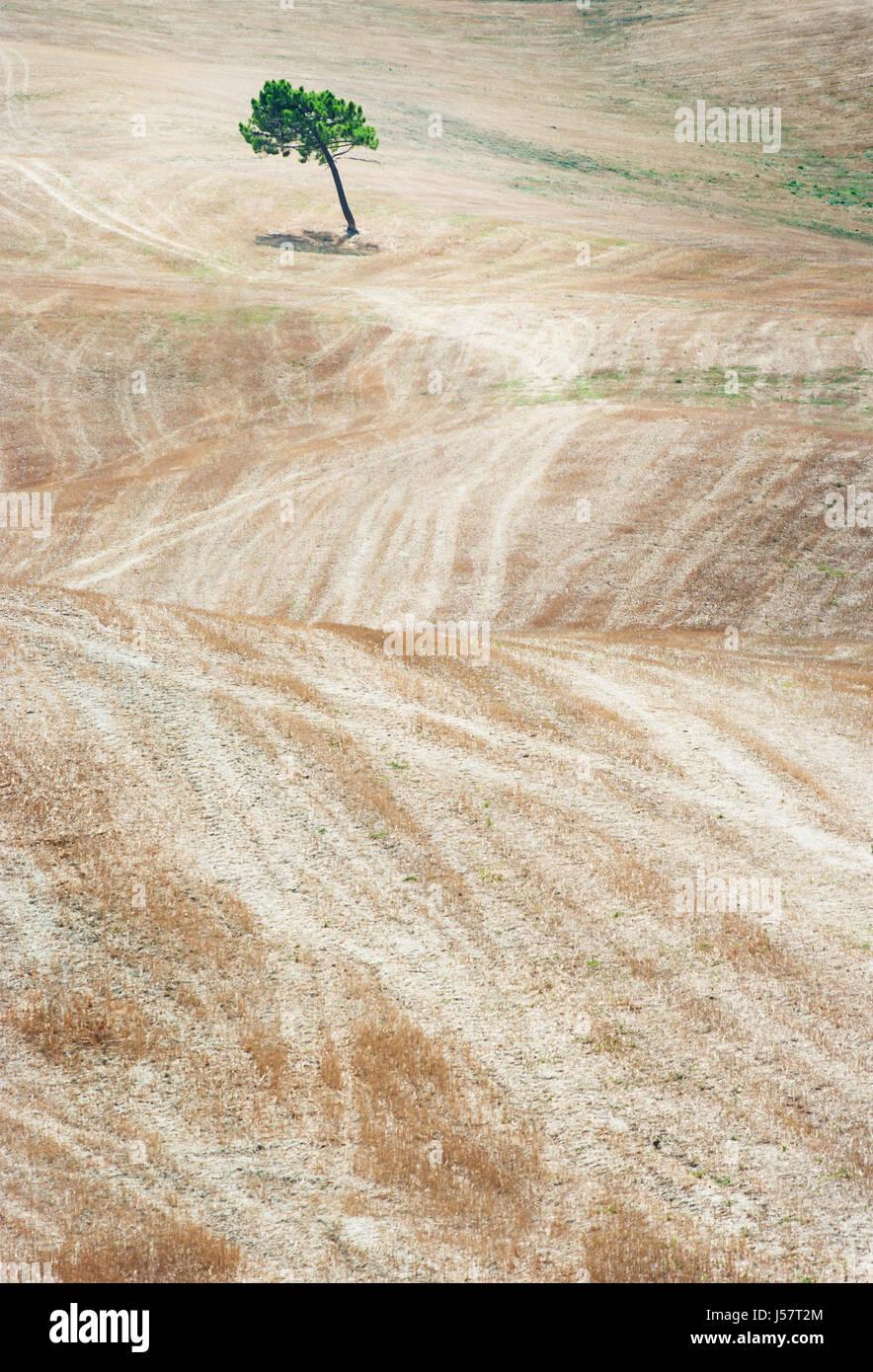 Tree in the field, Tuscany Italy Stock Photo