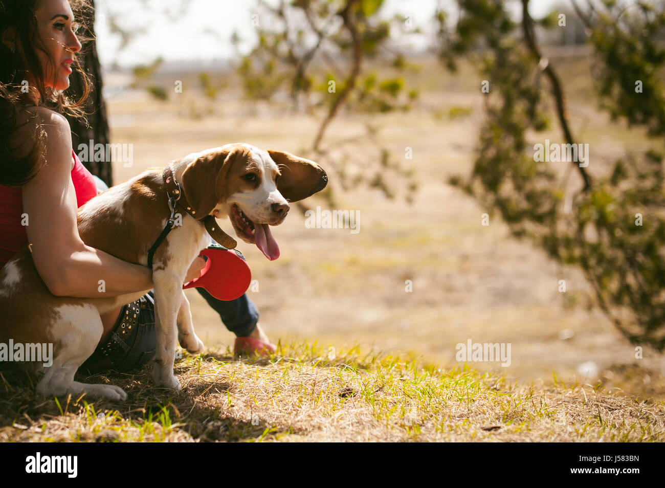Young pet dog breeds beagle walking in park outdoors. woman carefully walks puppy, plays and tranitsiruetsya, sits - Stock Image