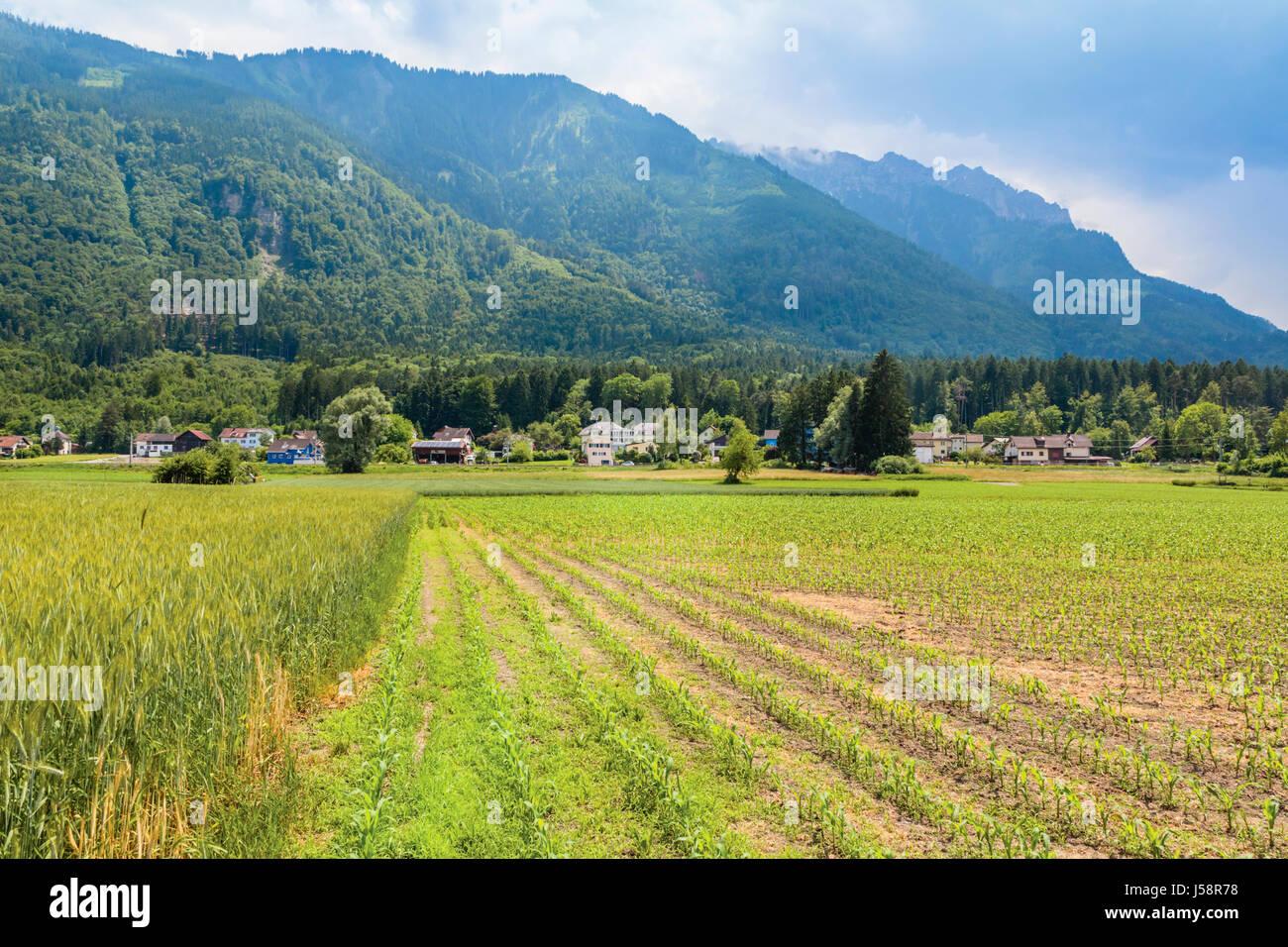 Liechtenstein.  Farming scene. Stock Photo