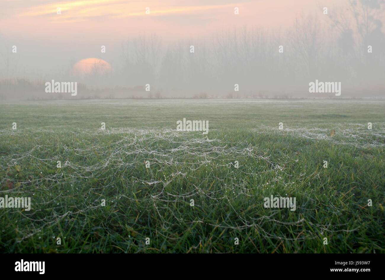 humour tree sunset agriculture farming field fog haze reed europe mood ripe - Stock Image