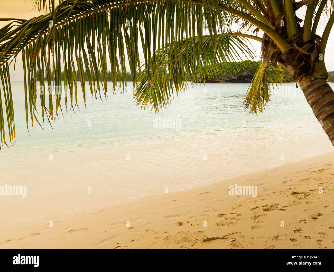 Tropical beach scene with palm tree, sandy beach and clear water - Stock Image