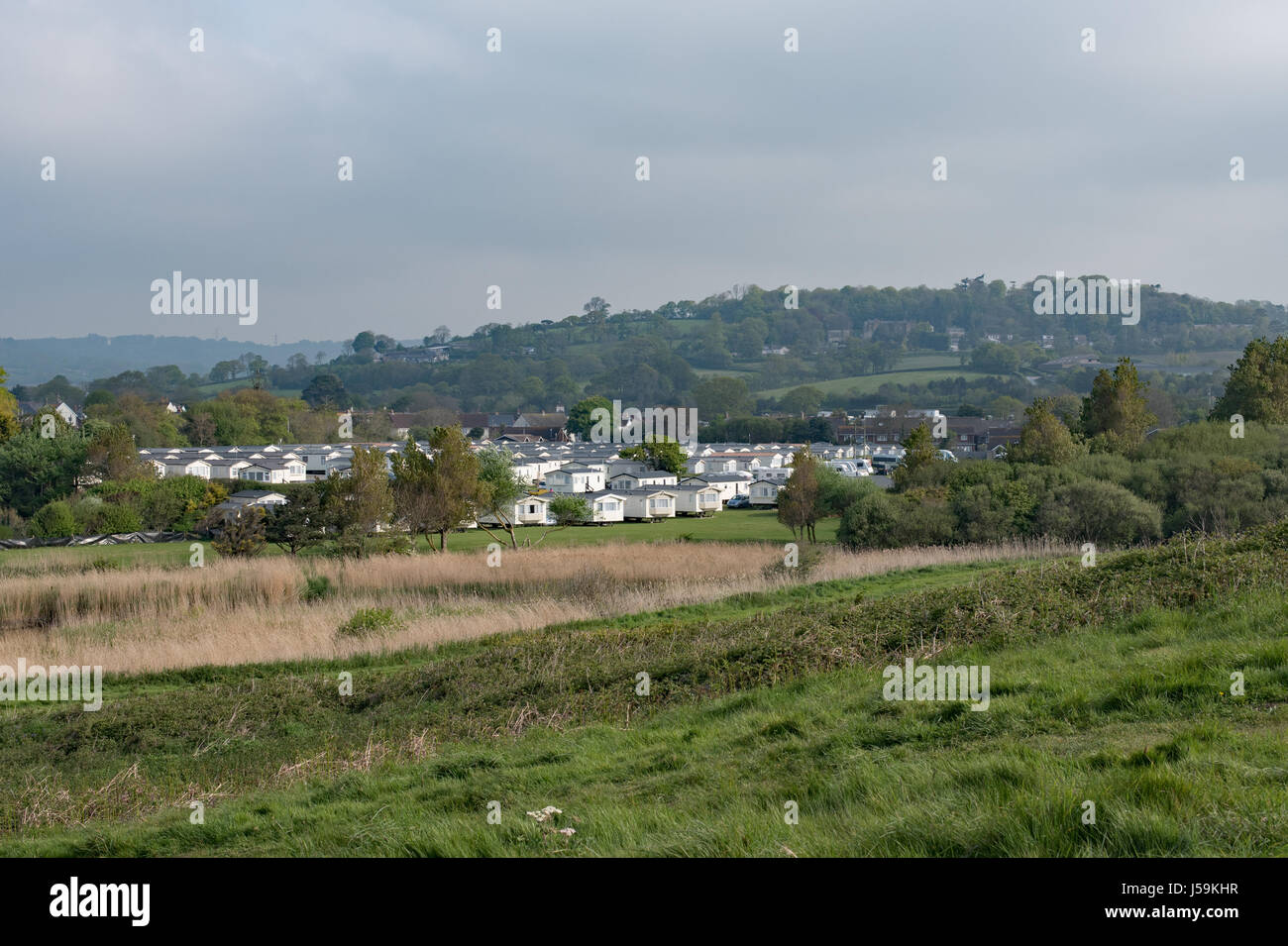 The reed beds edging the River Char at Charmouth, Dorset. - Stock Image