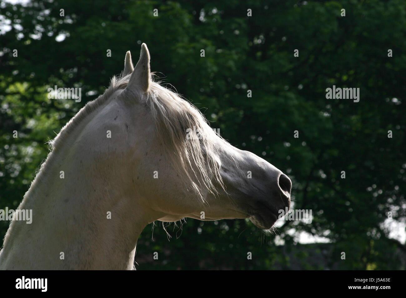 yearningly - Stock Image