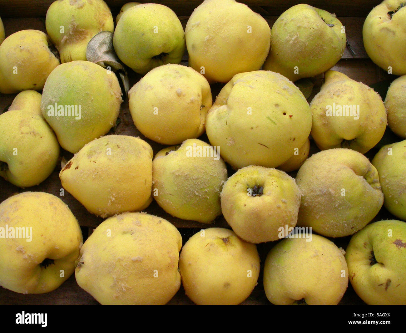 Pome Quinces Quince Herbsternte Herbstfrchte Cydonia Oblonga Stock