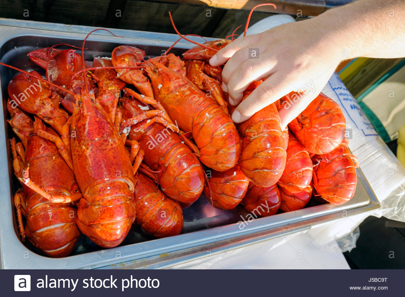 Cocoa Beach Florida Cocoa Beach Pier Hand Food Outdoor