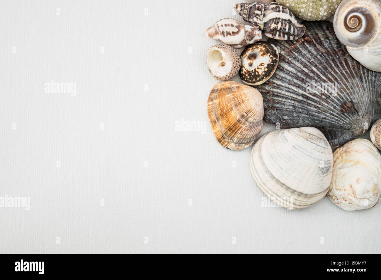 sea shells on white background invitation or flyer template