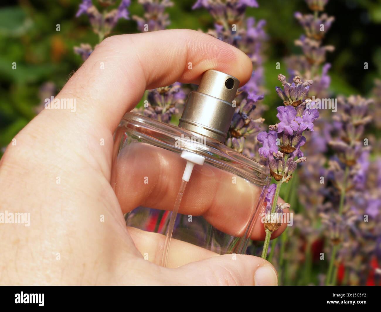 lavendelduft Stock Photo