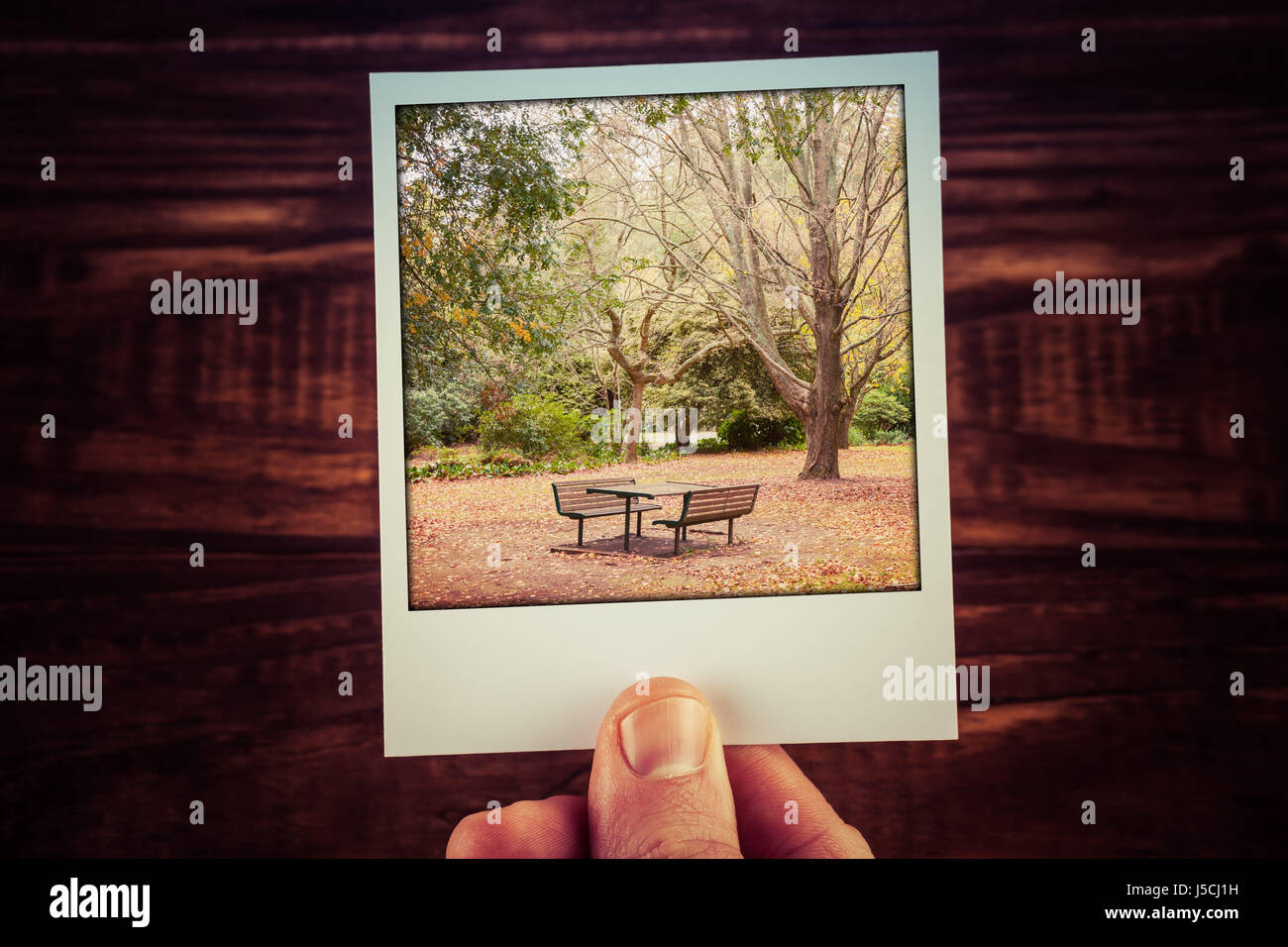 Male hand holding polaroid photo of autumn scene - empty picnic table, foliage, and bare trees with copy space. - Stock Image