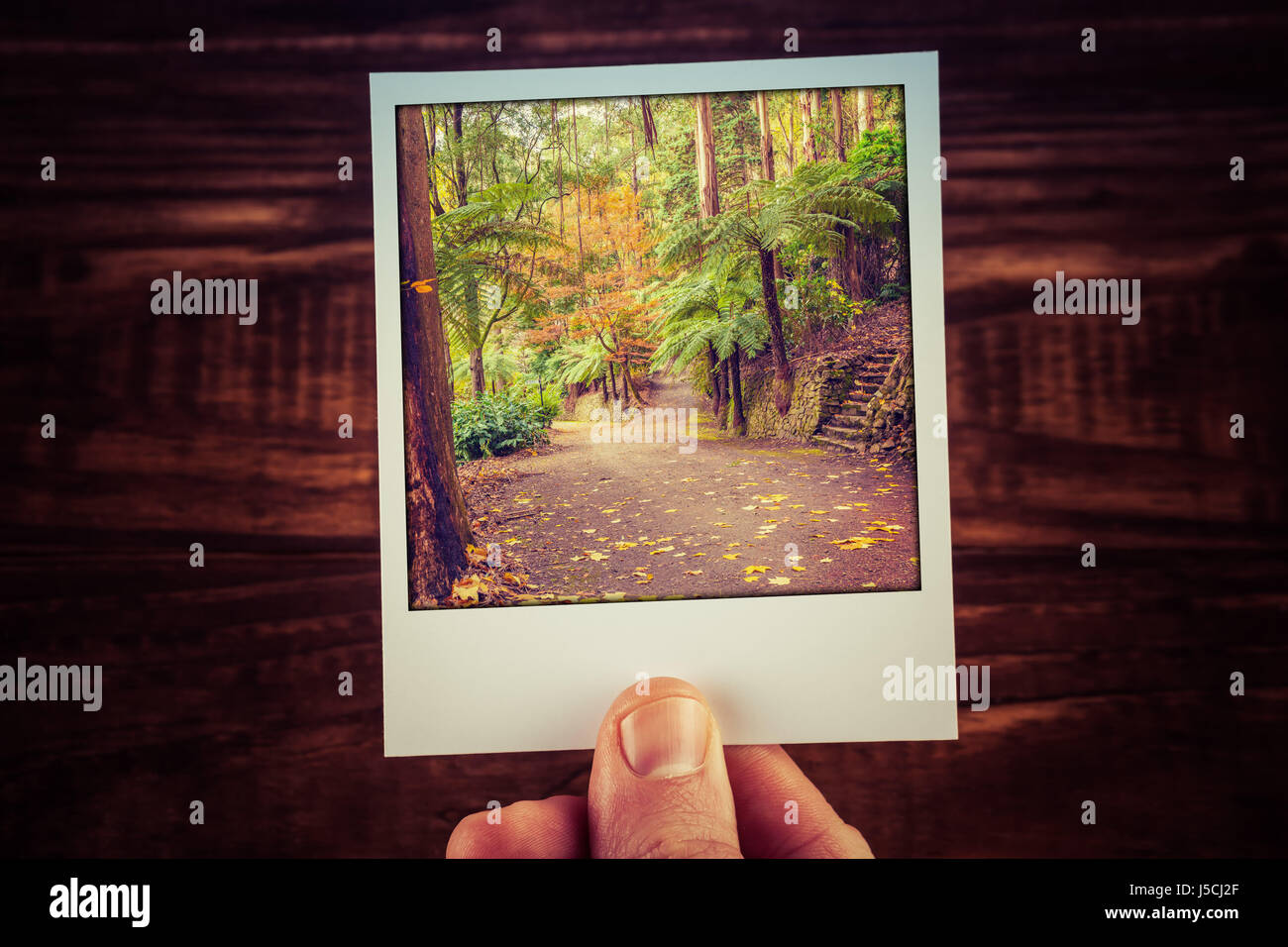 Hand holding polaroid photograph of autumn scene in Australian garden with copy space. Travel memories of good old - Stock Image