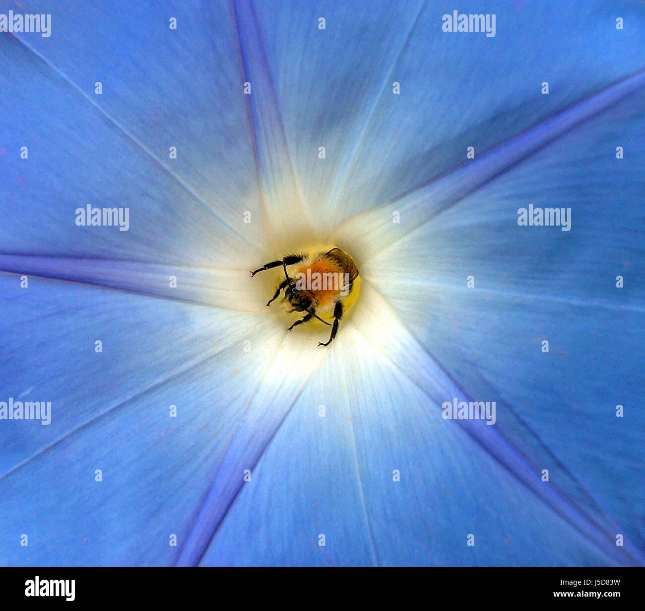 hummel roost (edited) - Stock Image