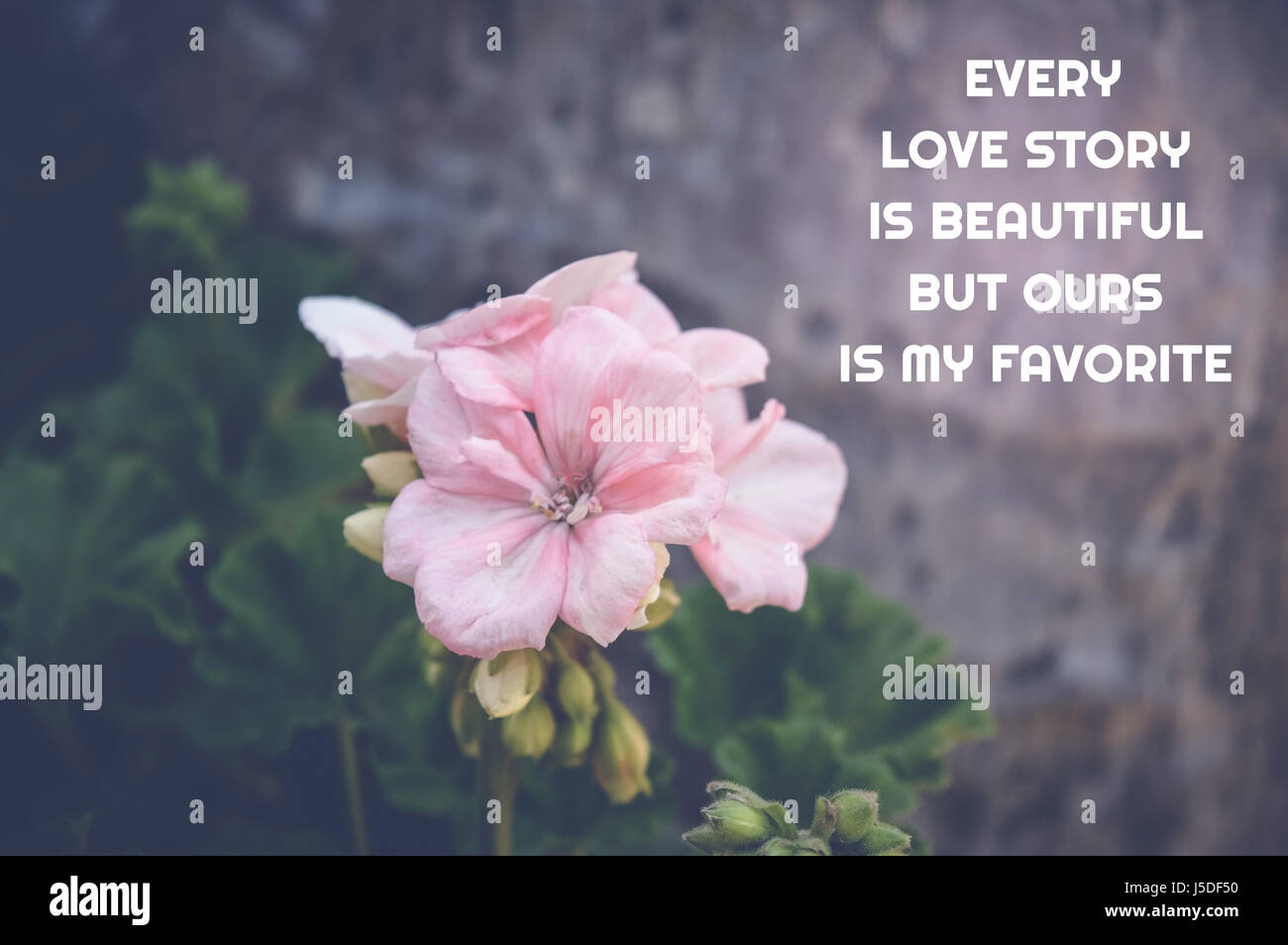 love quote pink flower background every love story is