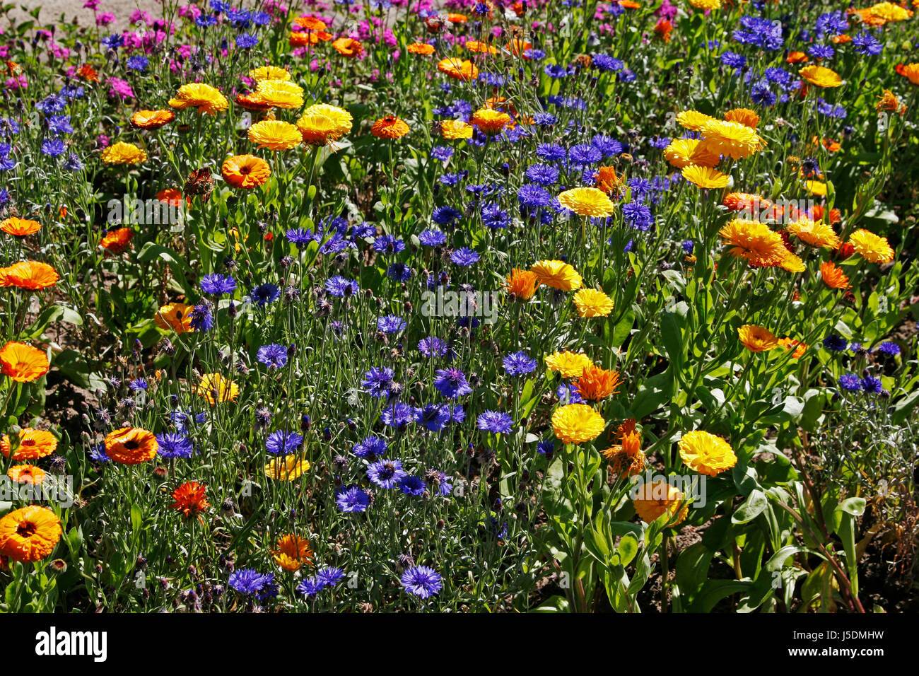 blue coloured colourful gorgeous multifarious richly coloured summer summerly Stock Photo