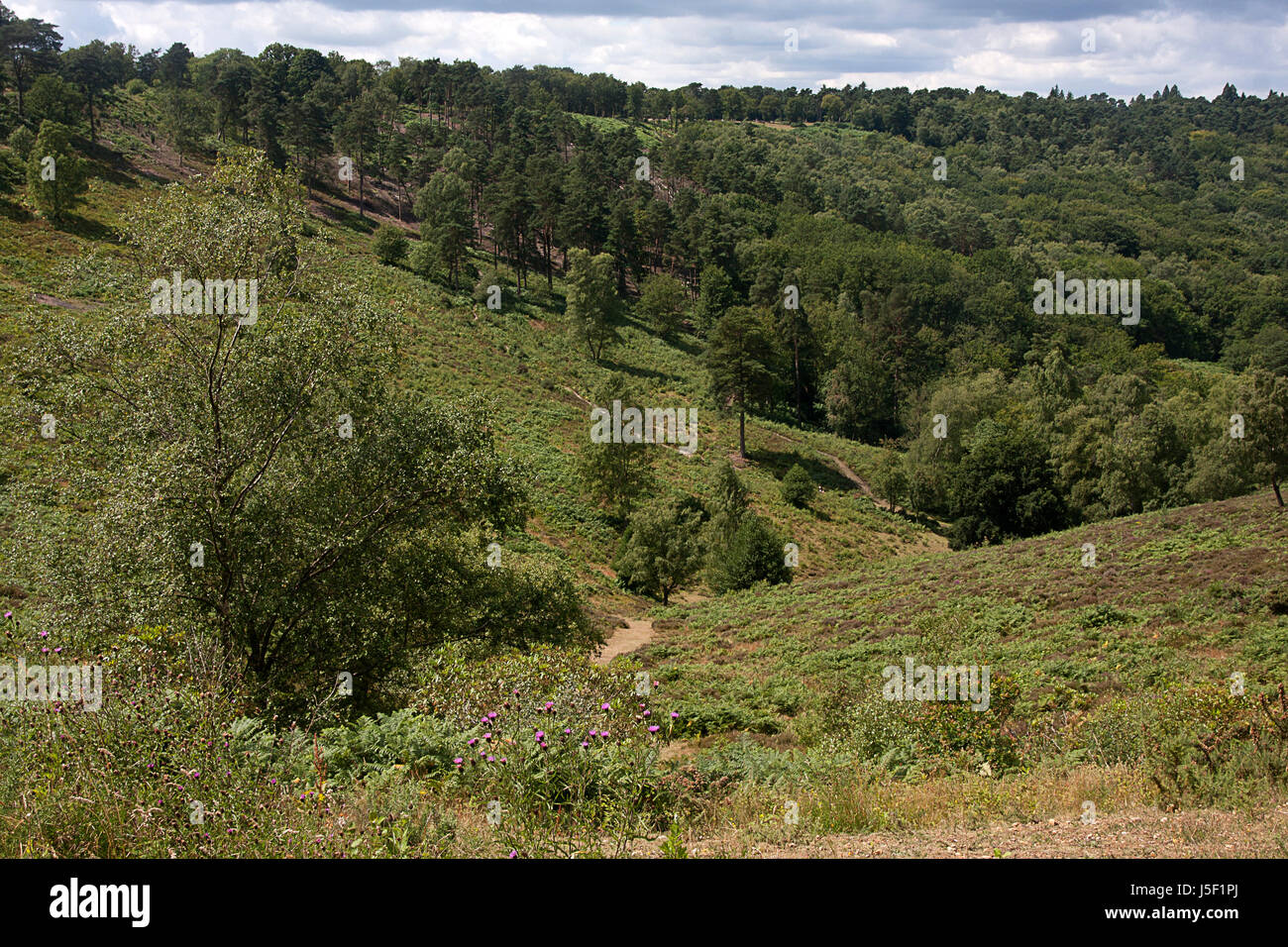 Devils Punchbowl, ancient spring sapped valley in Britain dating  back to the Mesozoic period, Hindhead, Surrey - Stock Image