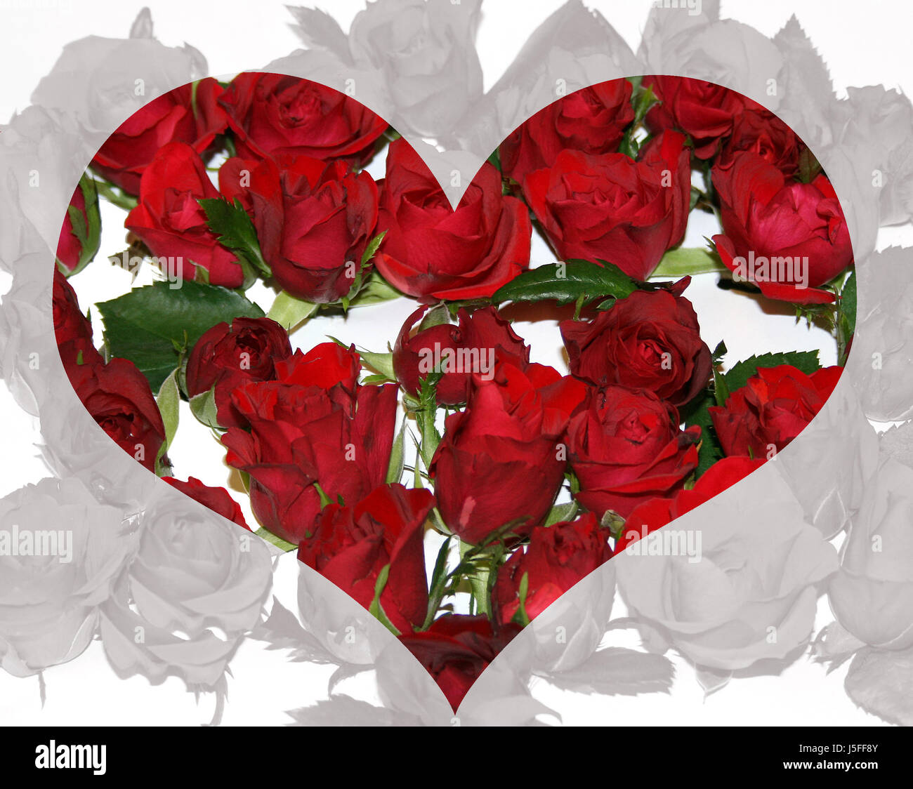 roses mother day valentines day motherly love valentin cordial love in love - Stock Image