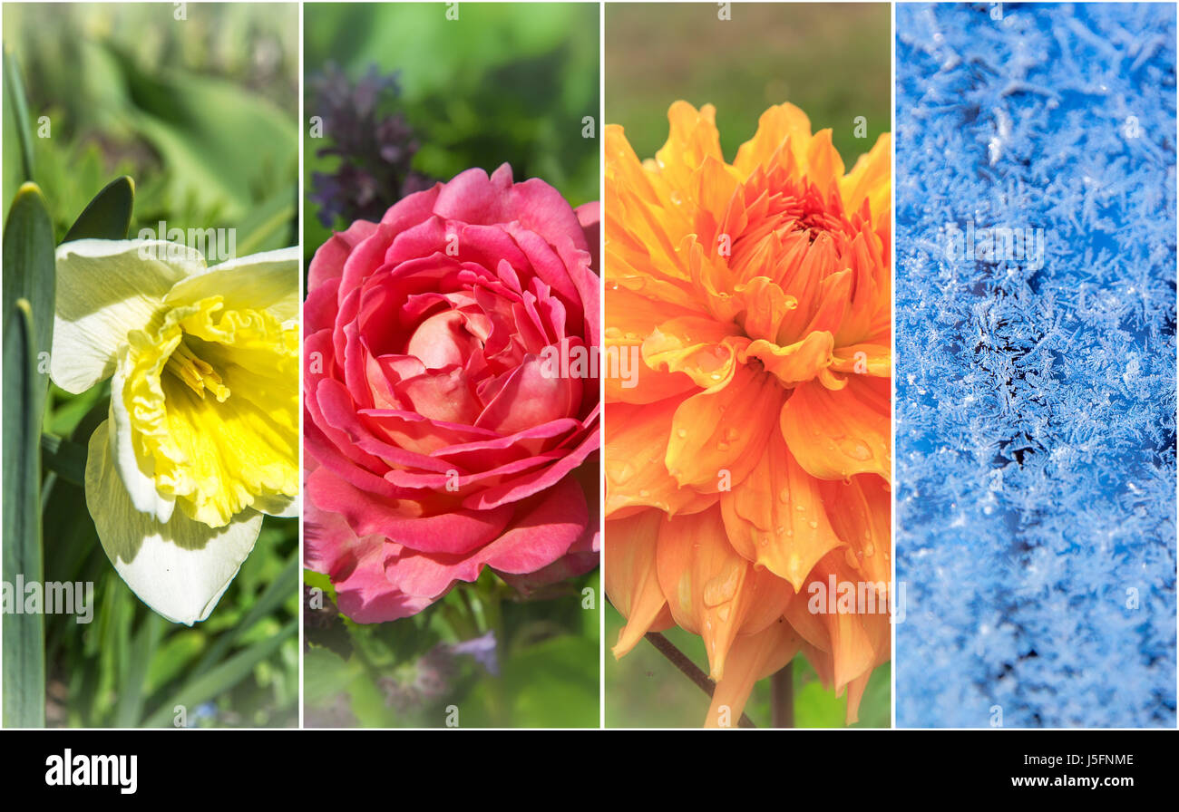 Four seasons: Spring, summer, autumn and winter - Stock Image