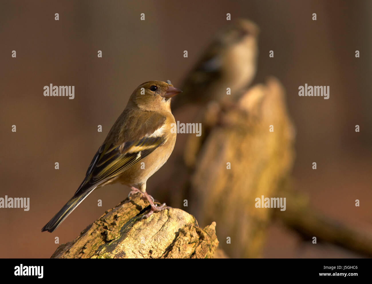tree look glancing see view looking peeking looking at spring branch feathers Stock Photo