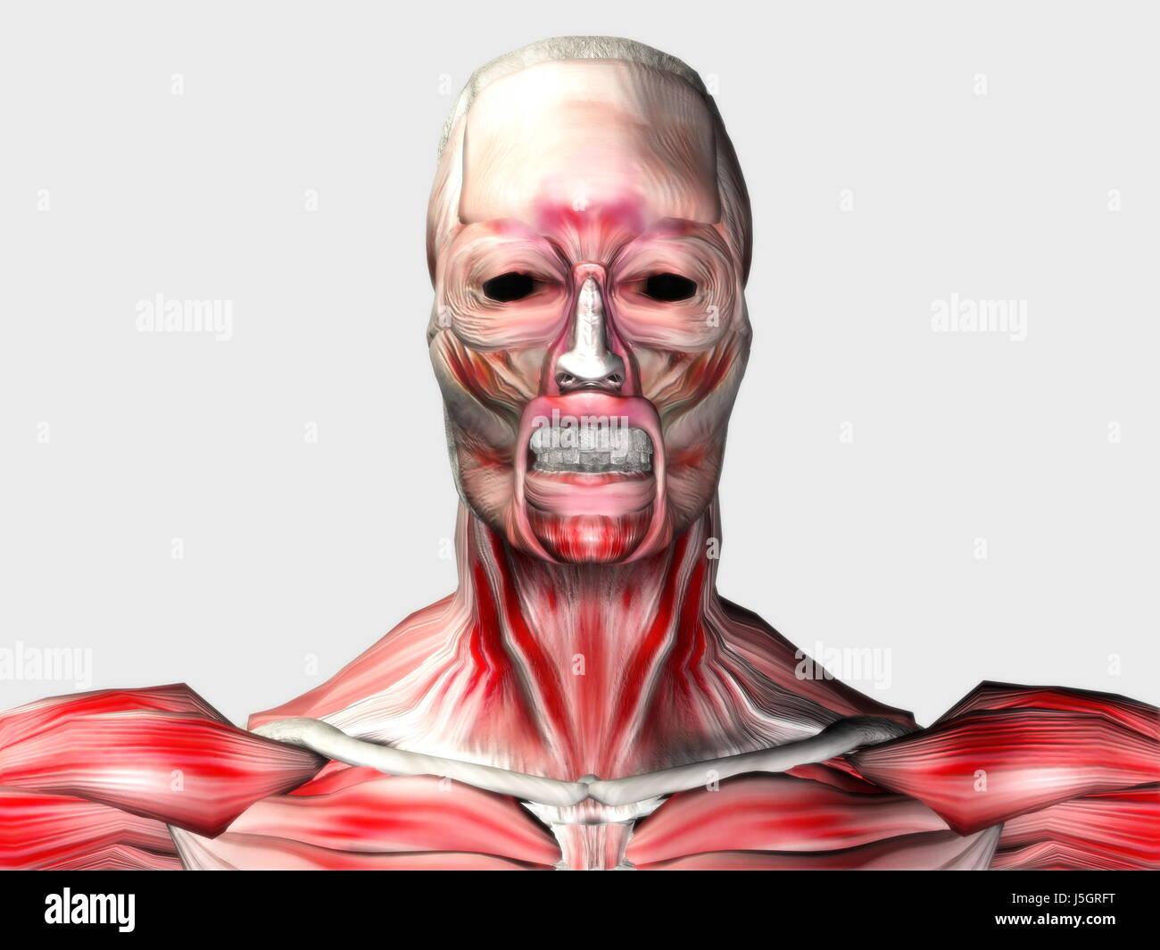 sport sports teeth pine face skin eyes muscles fantasy look glancing ...