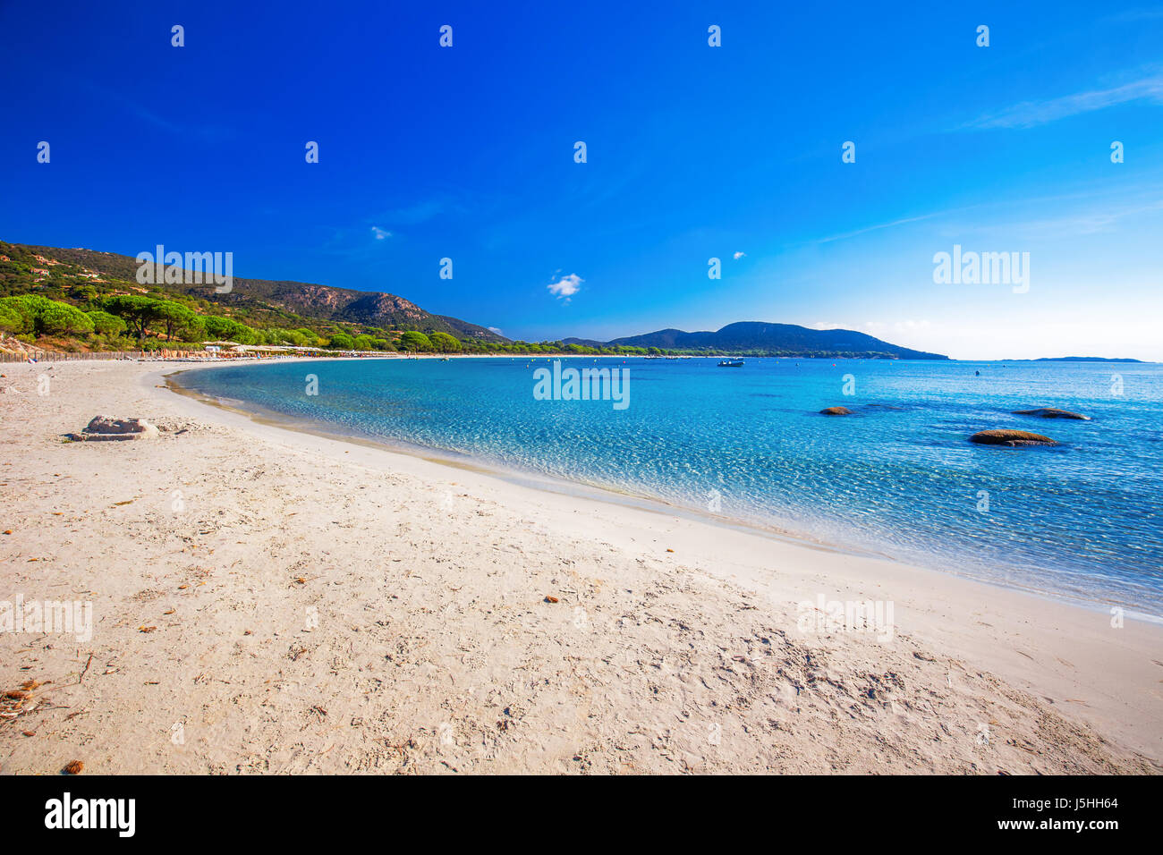Pine trees on Palombaggia beach with azure clear water and sandy beach on the south part of Corsica, France - Stock Image