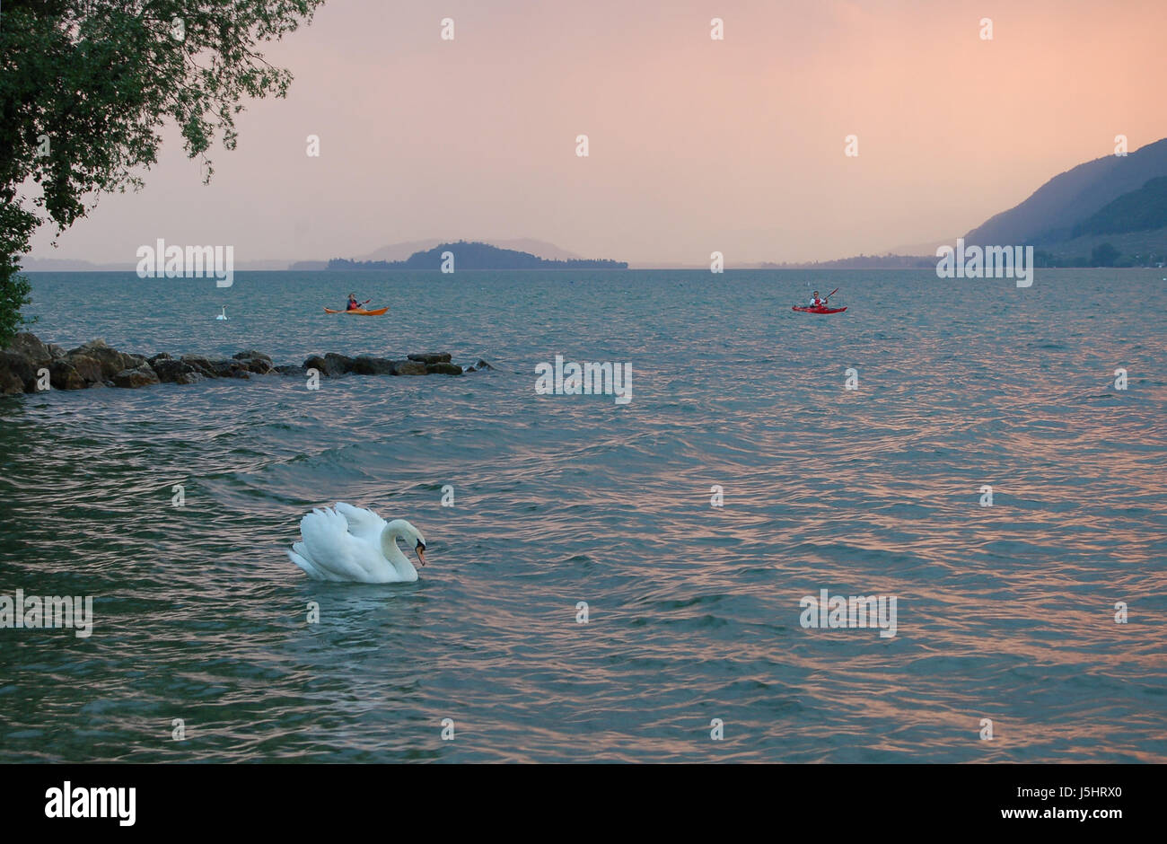 swan waves evening tendency thunder-storm breakwater salt water sea ocean water - Stock Image